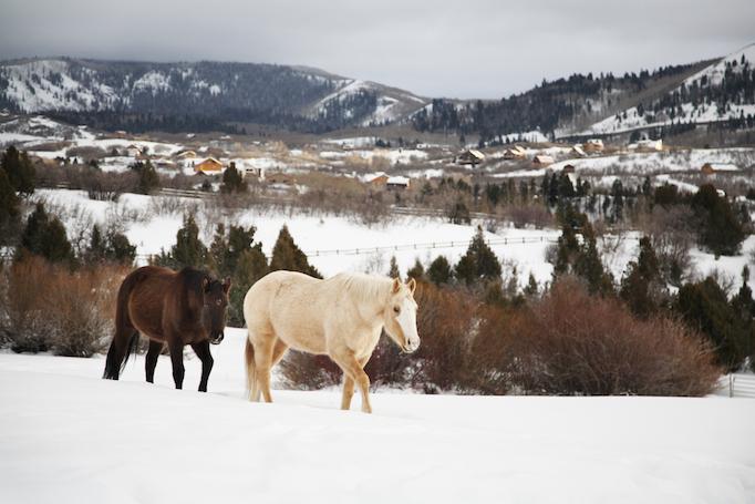 Timberlakes horses