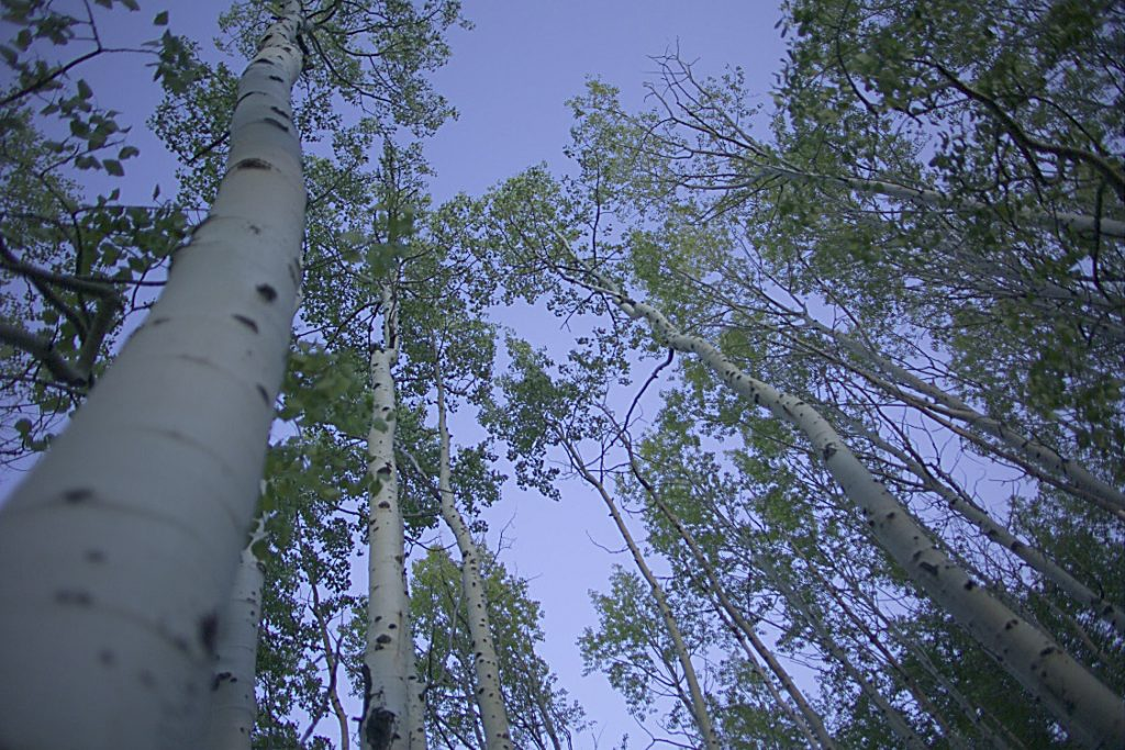summer hikes in park city
